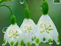 Latest Islamic Desktop Wallpapers HD Free