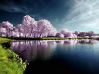 New Hd Natural Scenes Beautiful Wallpapers