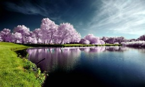 New Hd Natural Scenes Beautiful Wallpapers
